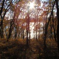 Луч солнца золотого... :: Арина