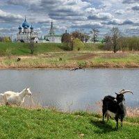 Cуздаль, вид на кремль :: Валерий Толмачев