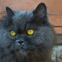 Чужая кошка :: Сергей Уральцев