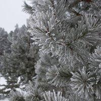 Морозно :: Сергей Уральцев