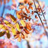 краски осени :: Эльмира Суворова
