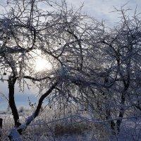 Зимнее солнце :: Марина Егорова