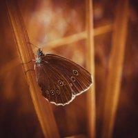 Бабочка :: Виктория Воробьёва