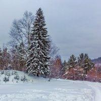 Таёжный пейзаж :: Анатолий Иргл
