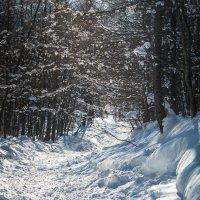 зима в лесу :: Наталья Литвинчук