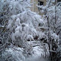 Деревья в снежном наряде :: Елена Семигина