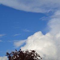 Облако. :: zoja