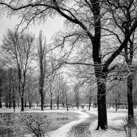 Теплая зима. :: Vladimir Kraft