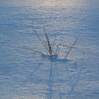 снежное безмолвие :: tgtyjdrf