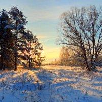 Морозное утро :: Павлова Татьяна Павлова