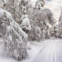 Под тяжестью снега :: vladimir