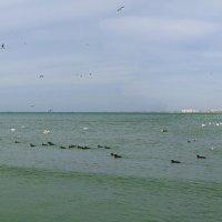 Черноморский залив :: Елена Нор