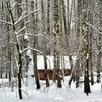 С камерой по зимнему лесу :: Милешкин Владимир Алексеевич