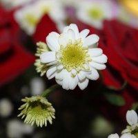 Один цветок :: Ксения Максудова