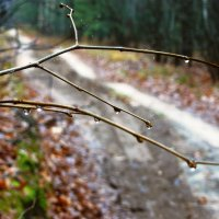 в осеннем лесу :: Леонид Натапов