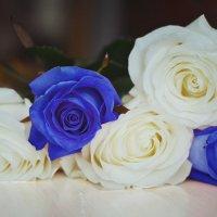 розы :: Аня