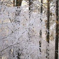 Каждая погода благодать... :: Галина