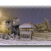 Сочинские зимние  сюрпризы! :: СветЛана D