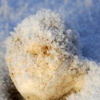 Морозный день... :: Ирина Токарева