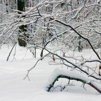 Зимняя природа в лесу.. :: Юрий Стародубцев