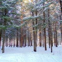 На лесной полянке . :: Мила Бовкун
