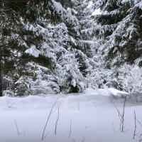 зимний лес :: petyxov петухов