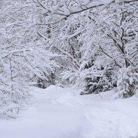 после снегопада :: petyxov петухов