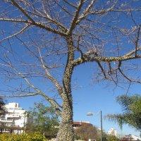 С этим деревом не обнимешься :: Герович Лилия