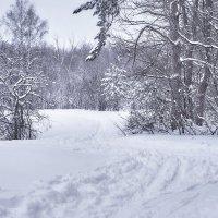 Зима :: Алексей Головин