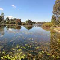 Лесное озеро.Австралия :: Антонина