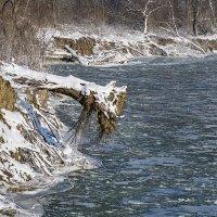 Про деревья и реку :: Игорь Сикорский