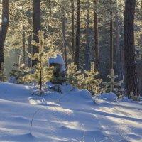 Зимний лес :: Николай Полыгалин