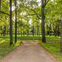 Осенний парк :: Алёнка Шапран