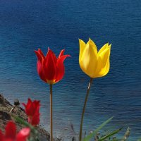 цветы у моря :: viton