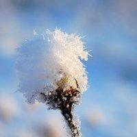 Зимние цветы :: Елена Семенова