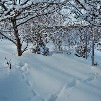 Экскурсия в Гадюкино зимой (23) :: Александр Резуненко