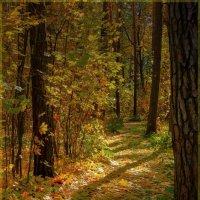 В осеннем лесу. :: Laborant Григоров