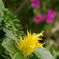 Желтый цветок :: Оксана Лада