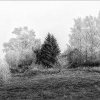 Деревенская картинка... :: Александр Никитинский
