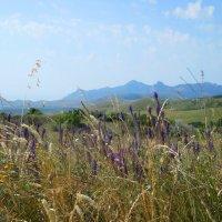 Горные травы :: Виктор Шандыбин