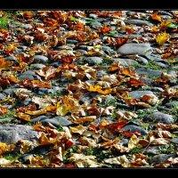 Листья жёлтые нам под ноги ложатся... :: АЛЕКСАНДР СУВОРОВ