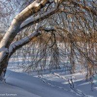 Зимняя зарисовка. Фото 10. :: Вячеслав Касаткин
