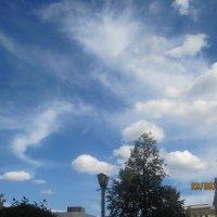 облака лошарики :: Tatyana Kuchina