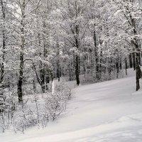 Во власти снега :: Милешкин Владимир Алексеевич