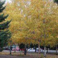 осень в городе3 :: Alexandr Staroverov