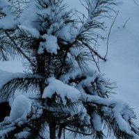 маленькой ёлочке холодно зимой :: Юлия Игнатова