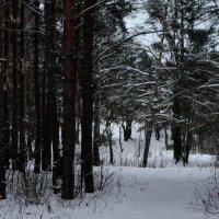 зимний лес :: Юлия Игнатова
