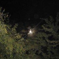 Ночкой темной - красавица Луна :: Tatyana Kuchina