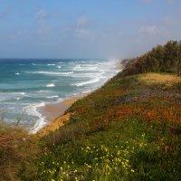 где суша встречается с морем :: ALEX KHAZAN