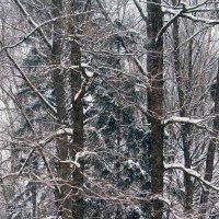 Вид из окна, или графика зимы :: Вячеслав Минаев